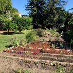 Garden photo_051520